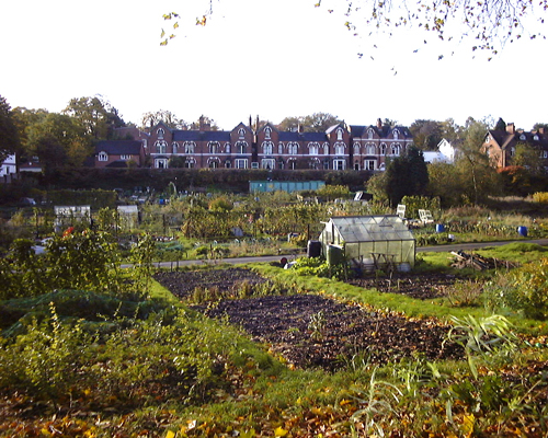 allotment_2.jpg